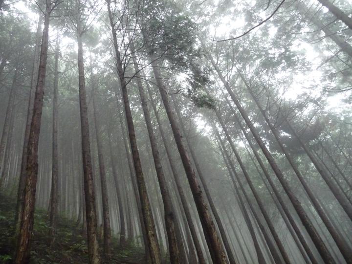 雲取山林道